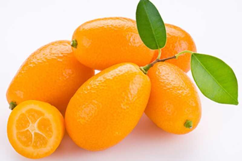 Kaj je kumquat in kakšne so njegove prednosti in koristi?