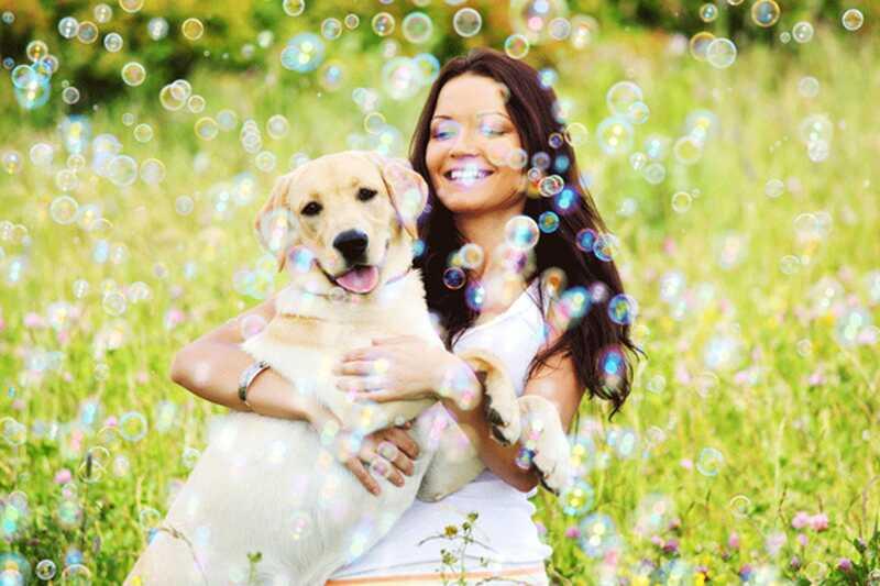 10 čudovitih lekcij, ki jih lahko psi naučijo, kako biti srečni in vsebinski