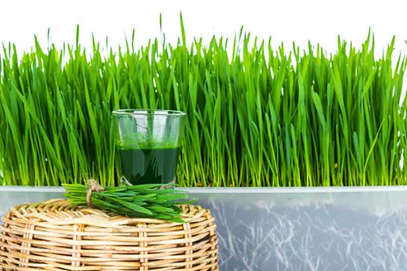 50 neverjetnih prednosti pšenične pege za zdravje in lepoto