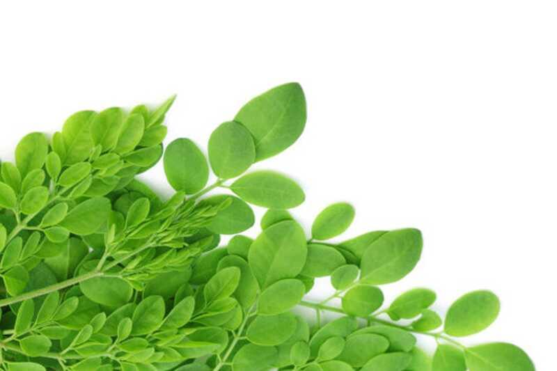 10 neverjetnih zdravstvenih koristi in uporabe moringa listov