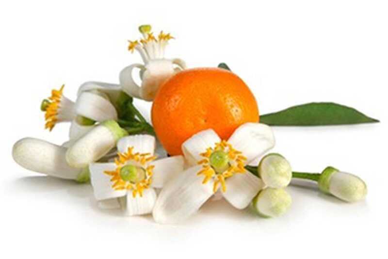 10 neverjetnih prednosti in uporabe cvetov oranžne cvetovine