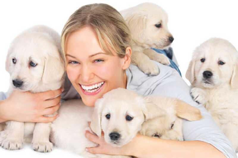 8 razlogov, zakaj hišni ljubljenčki izboljšajo vaše življenje in vaše zdravje